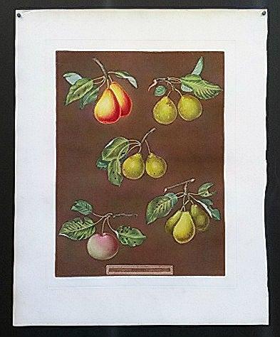 George Brookshaw, pairs on stem, vintage art, fruit, business art