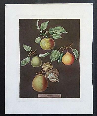 George Brookshaw, pears, fruit art, business art