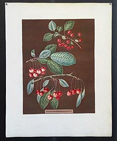 George Brookshaw, cherry art, cherries on stem, vintage art, business art
