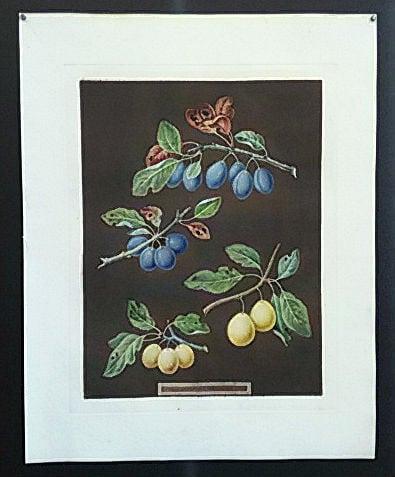 George Brookshaw, plums, fruit art, vintage art, business art