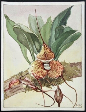 plant art, plant life, botanical art, business art