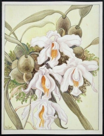 white iris, white flowers, botanical art, plant art, plant life, business art, white iris with orange