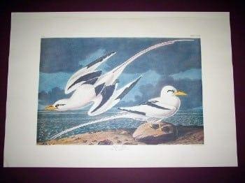 Audubon, John James - 262