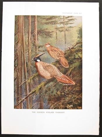 William Beebe, pheasants, pheasants in tree, bird art, animal art, business art