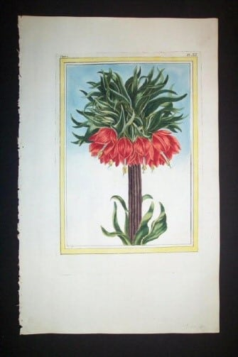 Pierre Buchoz, red flowers, botanical art, plant life, plant art, business art