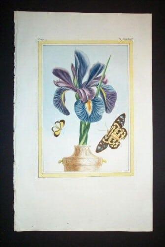 Pierre Buchoz, iris, floral art, butterfly art, plant life, plant art, business art