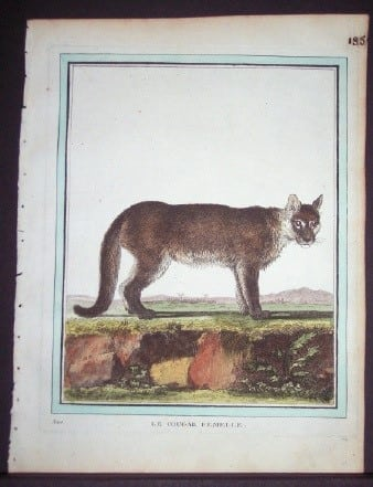 Comte Buffon, exotic animals, animal art, business art