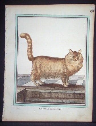Comte Buffon, exotic animals, exotic cats, cat art, animal art, business art