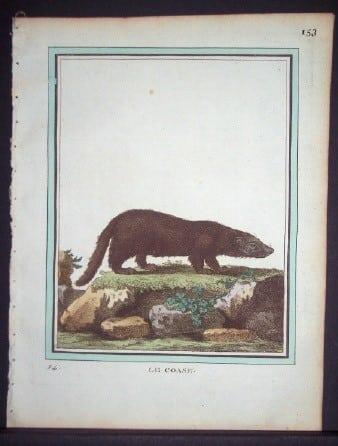 Comte Buffon, badger, wolverine, weasel, animal art, business art
