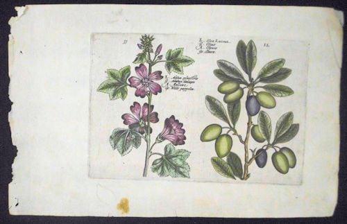 Crispin de Passe, figs, botanical art, purple flowers, business art