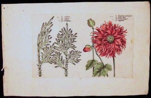 Crispin de Passe, floral art, vintage art, business art