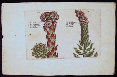 Crispin de Passe, botanical art, blooming flowers, business art