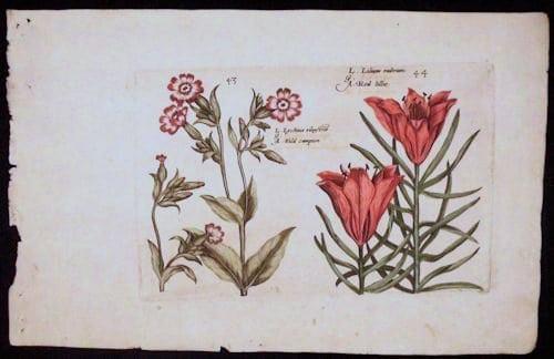 Crispin de Passe, red flowers, botanical art, business art