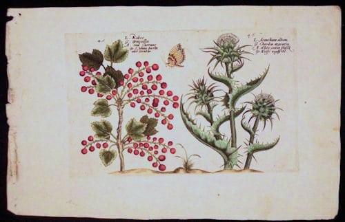 Crispin de Passe, botanical art, vintage art, business art