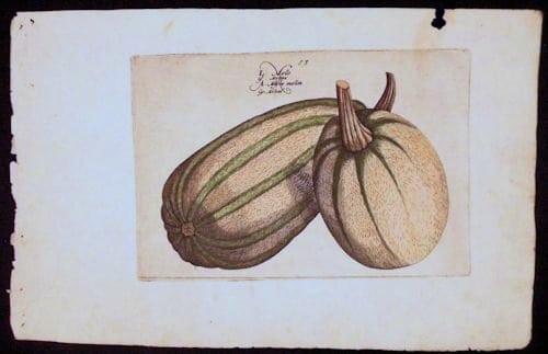 Crispin de Passe, gourds, vintage art, business art, pumpkin