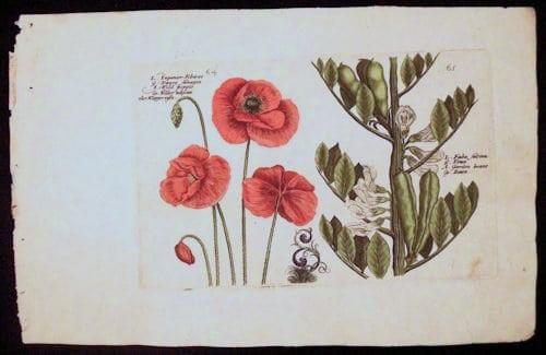 Crispin de Passe, botanical art, red flowers, white blooms, business art