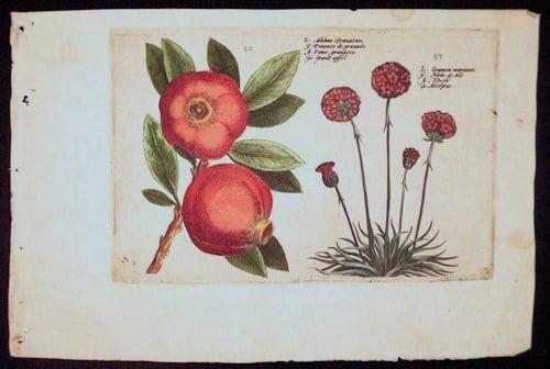 Crispin de Passe, vintage art, botanical art, business art