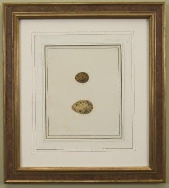 William Lewin, spotted eggs, bird art, animal art, business art