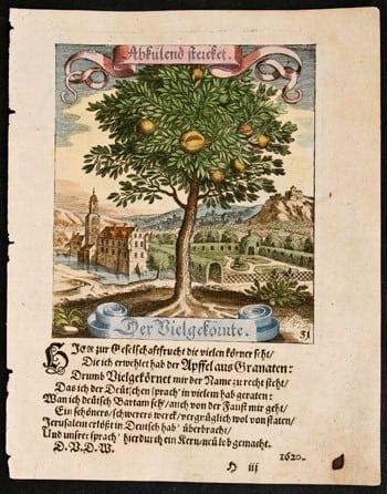 fruit tree, Matthaeus Merian, German art, German language, botanical art, plant life, business art, German countryside