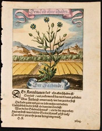 Matthaeus Merian, German art, German language, botanical art, plant life, business art, German countryside