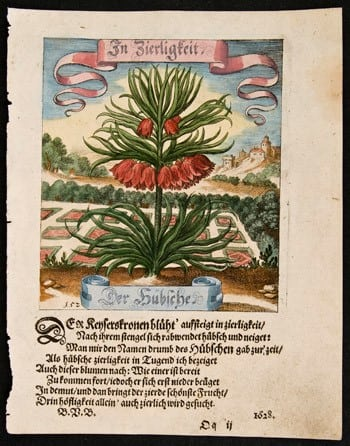 red flowers, Matthaeus Merian, German art, German language, botanical art, plant life, business art
