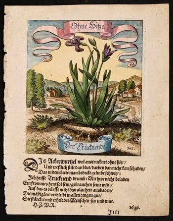 Matthaeus Merian, German art, German language, botanical art, plant life, business art