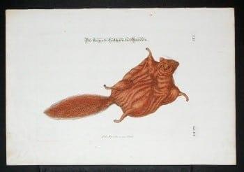 J. D. Meyer, exotic animals, flying squirrel, animal art, weird art, business art
