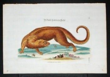 J. D. Meyer, exotic animals, animal art, weird art, business art