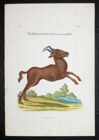 J. D. Meyer, antelope, wildlife, animal art, business art