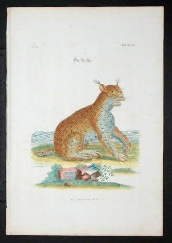 J. D. Meyer, exotic cats, cat art, animal art, business art
