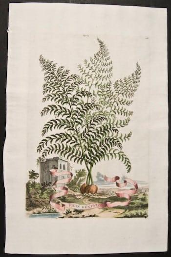 Abraham Munting, botanical prints, ferns, plant life, plant art, business art,