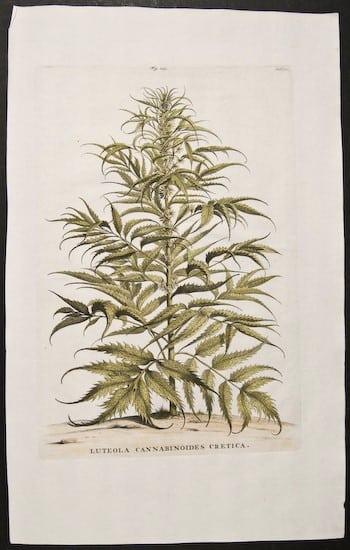 Abraham Munting, botanical prints, ferns, plant life, plant art, business art