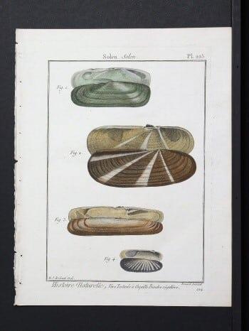 Panckoucke, Charles Joseph - 225