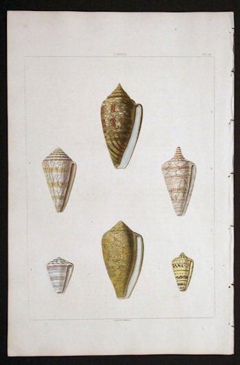 George Perry, seashells, beach art, ocean art, seashell diagram, business art