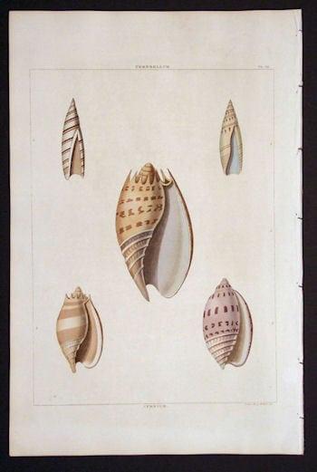 George Perry, seashell, beach art, ocean art, business art