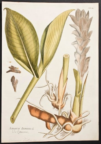 Joseph Jacob Plenck, plant life, plant art, plant diagram, botanical art, flower bulbs, business art
