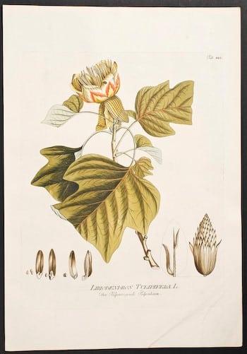 Joseph Jacob Plenck, botanical art, plant art, plant life, business art, plant diagram