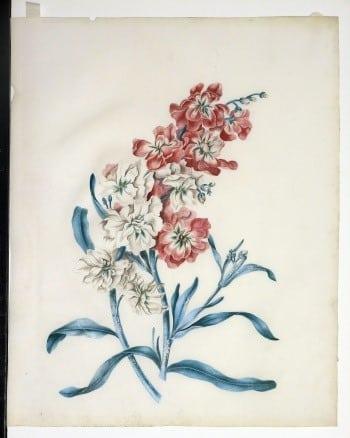 Sarah Rhodes, white flowers, red flowers, botanical art, flower art, business art