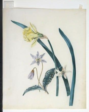 Sarah Rhodes, floral art, botanical art, business art
