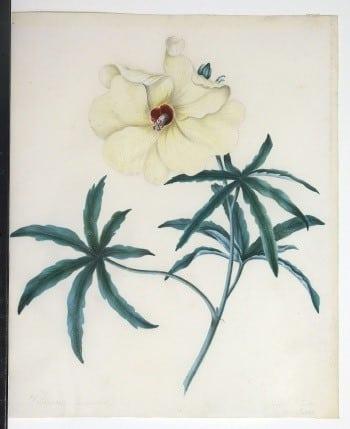 Sarah Rhodes, white flowers, plant art, floral art, botanical art, business art