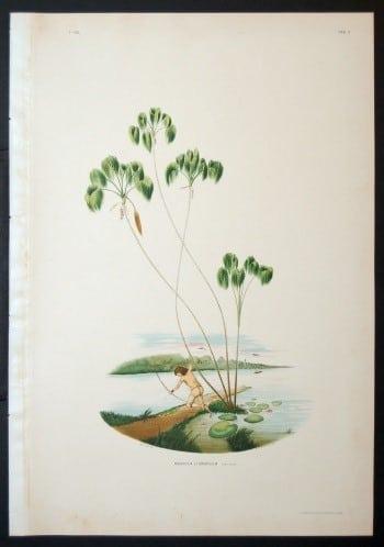 João Barbosa Rodrigues, beach art, Brazilian art, palm trees, horticulture, plant art, business art