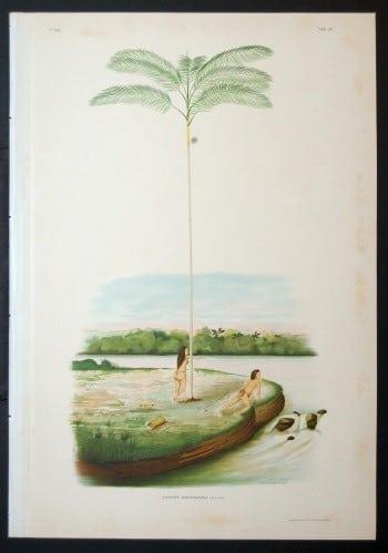 João Barbosa Rodrigues, Brazilian art, palm trees, beach art, business art
