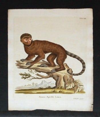 Johann von Schreber, monkey art, animal art, business art, primates