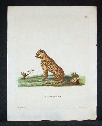 Johann von Schreber, exotic cats, cat art, animal art, business art
