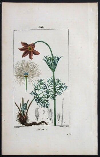 Pierre Jean Francois Turpin, horticulture, botanical art, plant life, plant art, business art