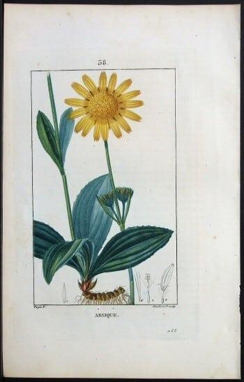 Pierre Jean Francois Turpin, yellow flower, floral art, botanical art, plant life, plant art, business art