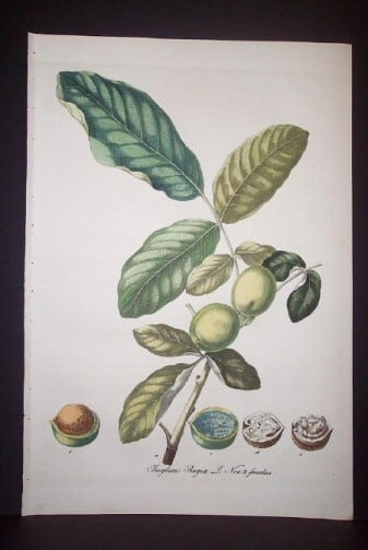 Daniel Wagner, horticulture, plant life, plant art, tree nuts, business art