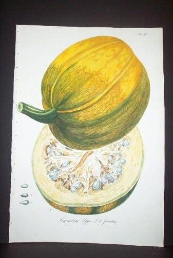 Daniel Wagner, gourds, pumpkins, botanical art, plant life, plant art, business art