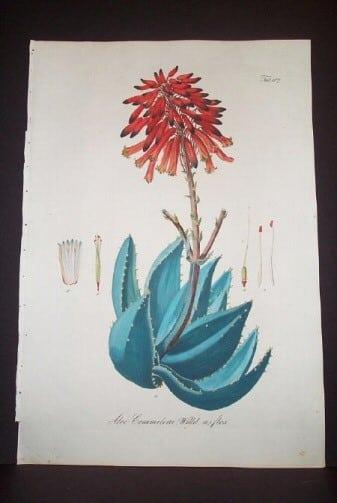 Daniel Wagner, red blossoms, succulents, botanical art, plant life, plant art, business art