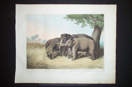 Captain Thomas Williamson, elephant art, endangered species, business art